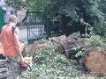 Спил  деревьев  Краснодар Обрезка и кронирование