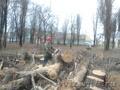 Спилить  обрезать кронировать дерево в Краснодар