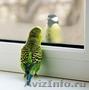 Окна, не пропускающие холод в дом! окна пвх в Краснодаре - Изображение #6, Объявление #1001817