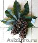 Семена клещевины Северная пальма