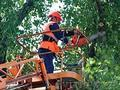 Спил деревьев Краснодар 8938-478-58-11