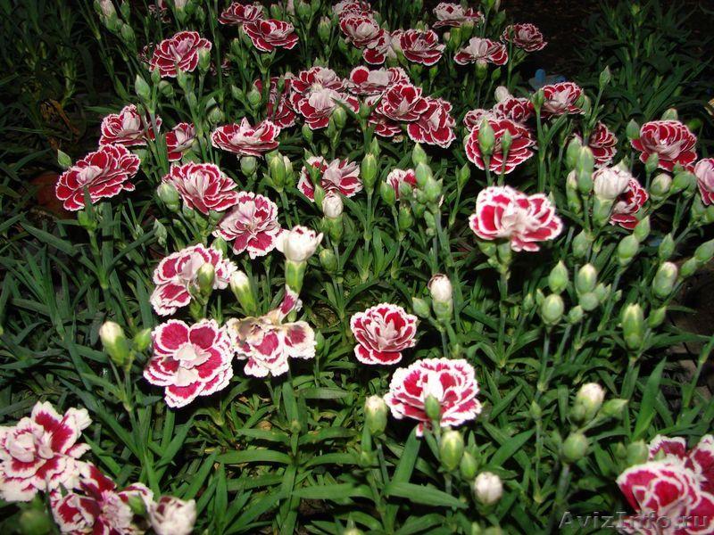 Комнатные цветы купить краснодар