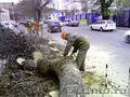 Профессиональный спил деревьев любой сложности - Изображение #10, Объявление #1199594