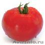 Семена Китано. Предлагаем купить семена томата ХИТОМАКС F1, Объявление #1214340