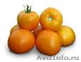 Семена Китано. Предлагаем купить  cемена желтого томата KS 17 F1, Объявление #1214337