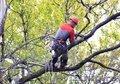 Спил Деревьев Краснодар., Объявление #1240097