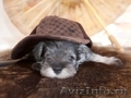 Открыта продажа щенков с родословной из питомника