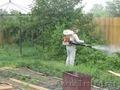 Обработка деревьев,  помещений от клопов,  тли и любых насекомых. Качественно!
