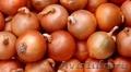 Продаем оптом лук репчатый 11 руб/кг в Краснодаре.