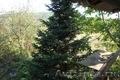 Продаётся дом в Тхамахе - Изображение #2, Объявление #1435757