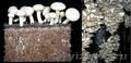 Компост Грибные блоки вешенка и шампиньонов мицелий купить в Крыму